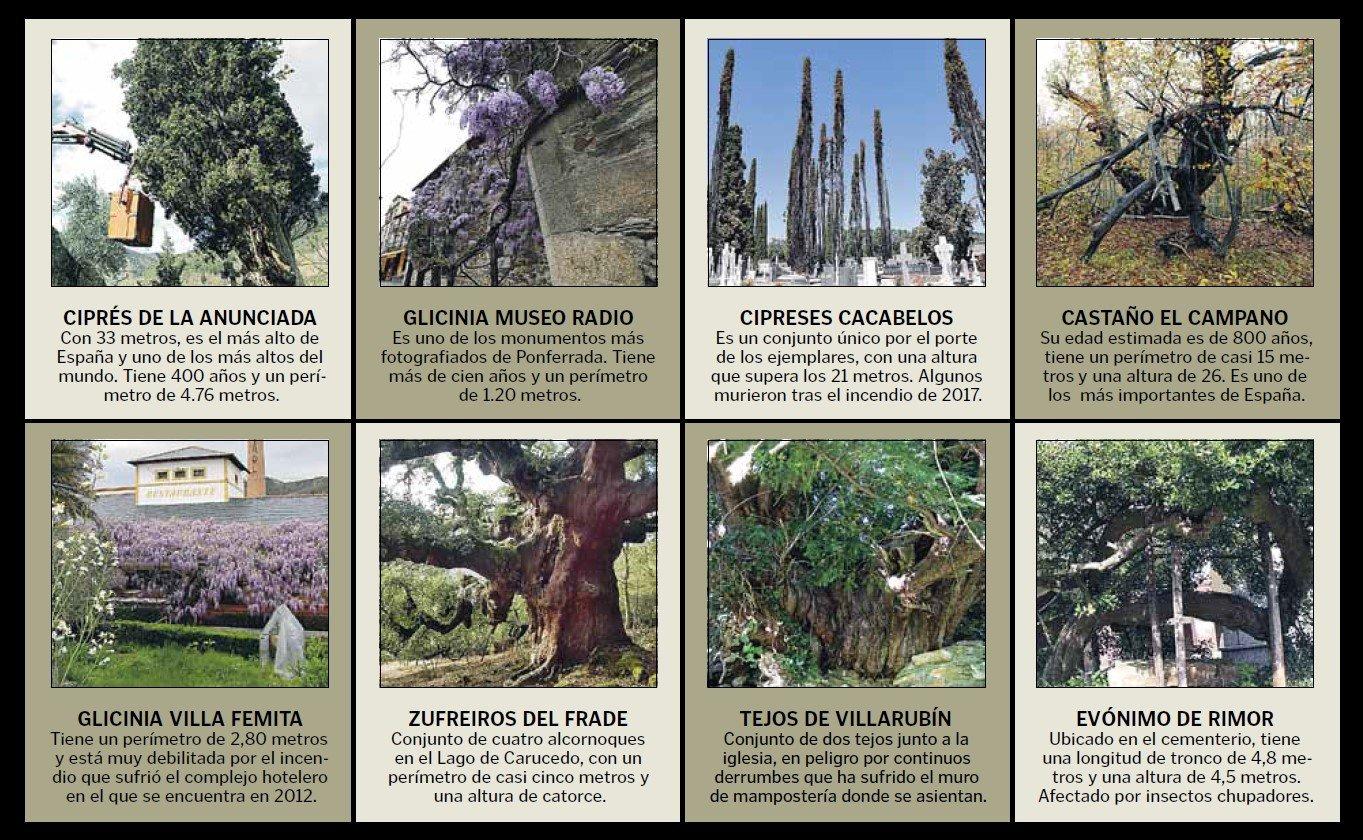 La falta de protección pone en jaque el rico patrimonio arbóreo del Bierzo